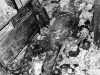 April 8, 1947, New York: View of the badly crushed and decomposed body of Langley Collyer, which was found in a two-foot wide tunnel burrowed through the fantastic junk in the Collyer mansion on Fifth Avenue.